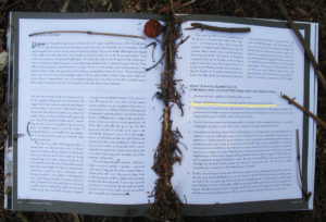Censorship: Acorn Flour from Tales from a Forager's Kitchen, by Johnna Holmgren
